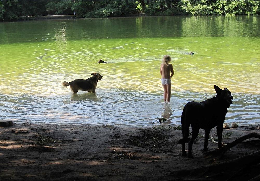 Hundeschwemmen