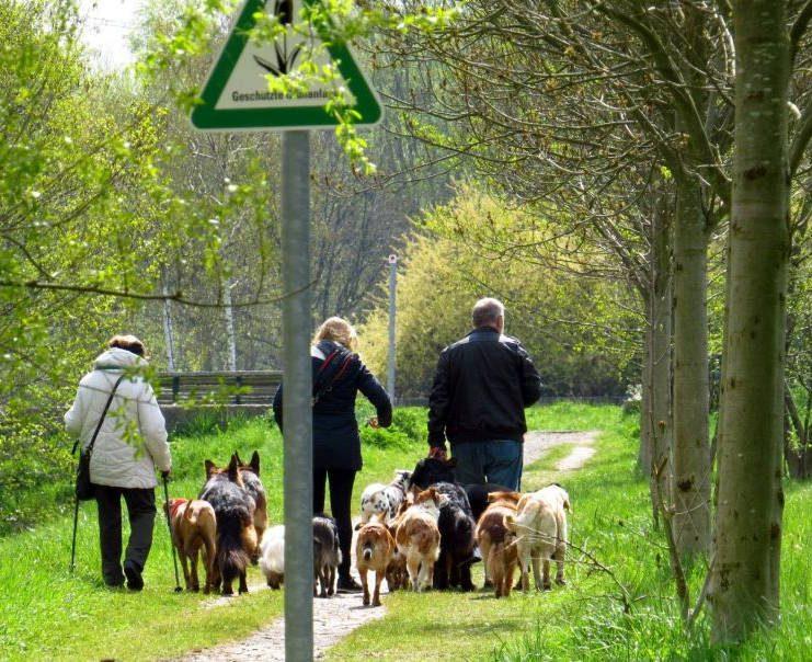 In geschützten Grünanlagen ist es verboten, Hunde frei laufen zu lassen (GrünanlG § 6,)